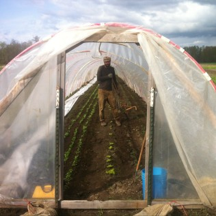 Our 100 foot hoop house, full of radishes, lettuces, kale, cress, green onions, and carrots...
